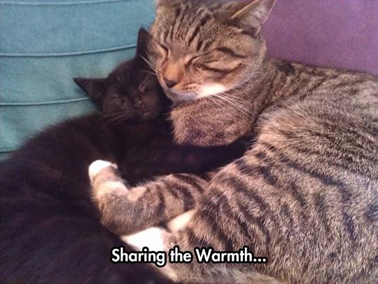 funny-cats-hugging-sleeping-warm