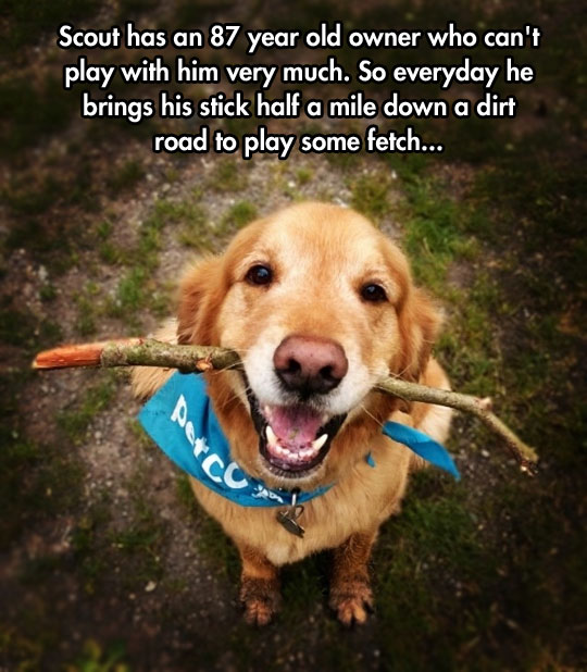 funny-cute-dog-playing-stick