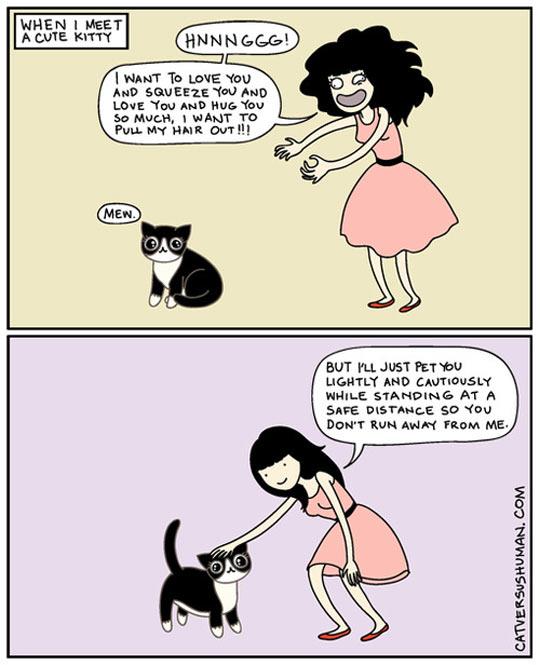 Meeting A Cute Kitty