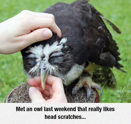 Owl Loves It