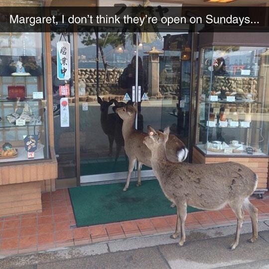funny-deer-store-waiting-close