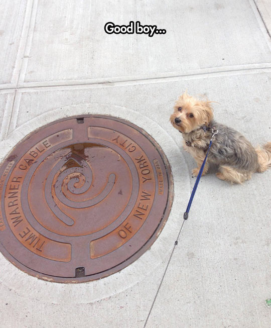 funny-dog-Time-Warner-Cable