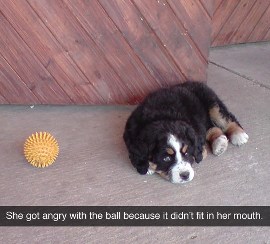 funny-dog-ball-fit-mad