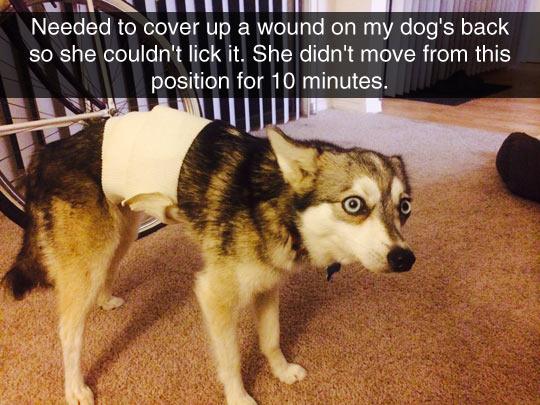 Dog Vet Bandage