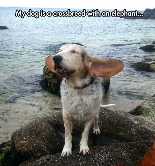 Dumbo, Is That You?