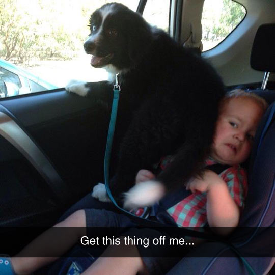funny-dog-car-baby-stepping-on