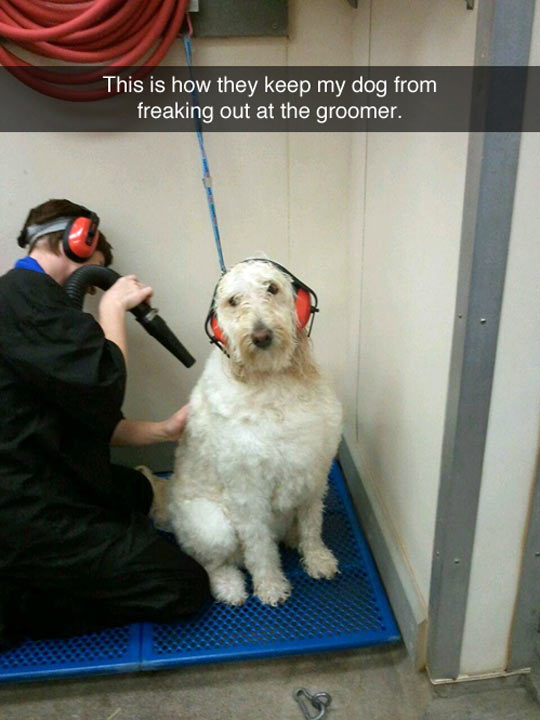 Dog Cleaning Precautions