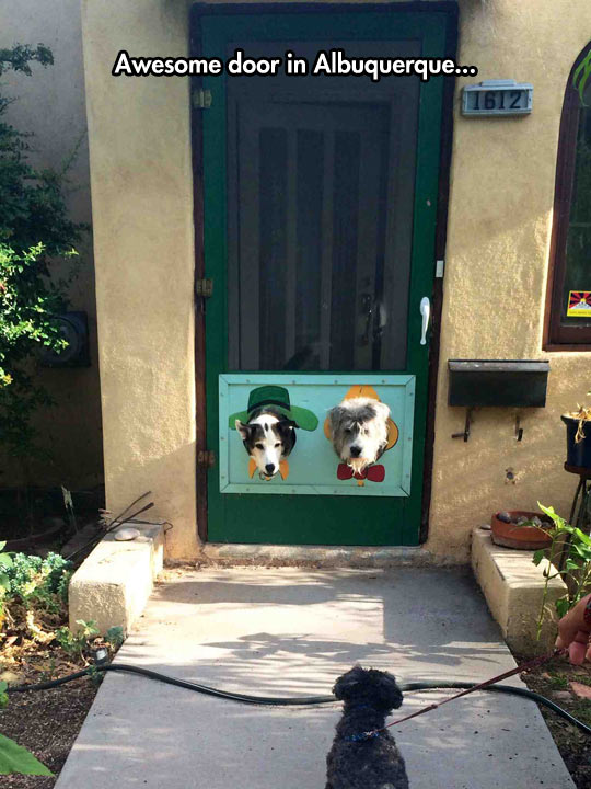 funny-dog-door-heads-hole