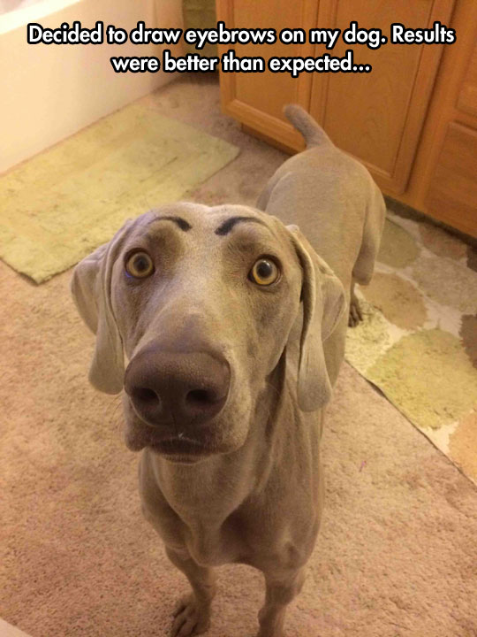 funny-dog-drawn-eyebrows-expression