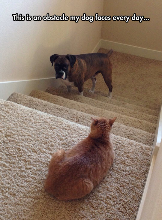 funny-dog-face-cat-stairs-sad