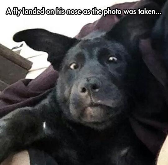 funny-dog-face-fly-snout