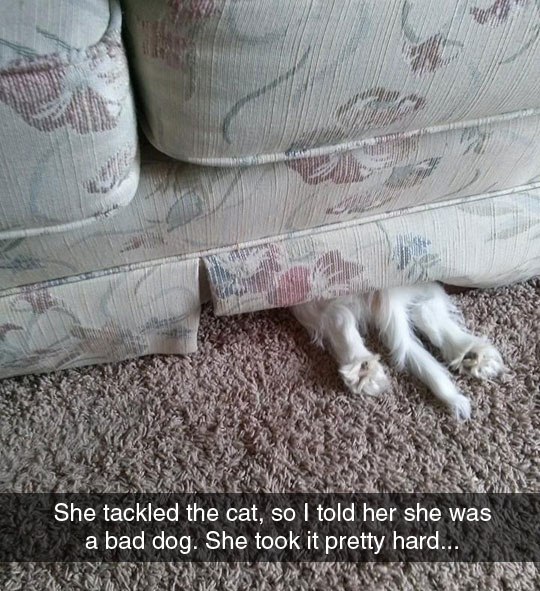 funny-dog-hiding-under-couch