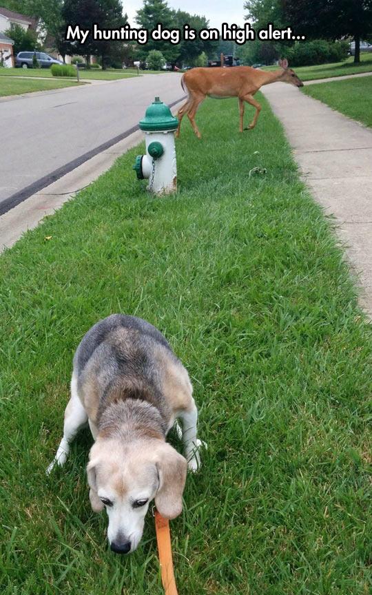 funny-dog-hunting-deer-neighborhood