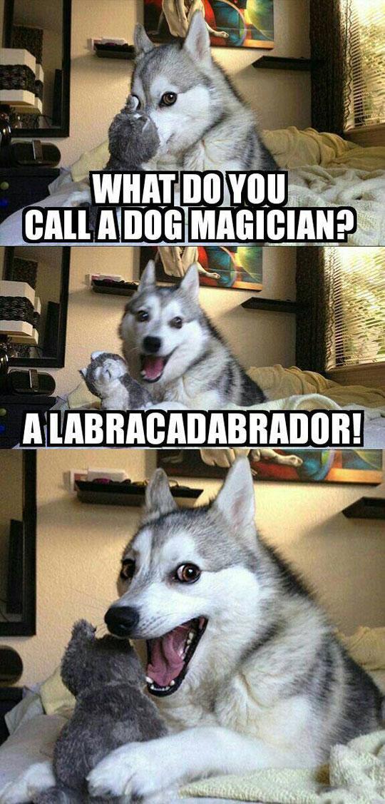 funny-dog-magician-call-Labrador