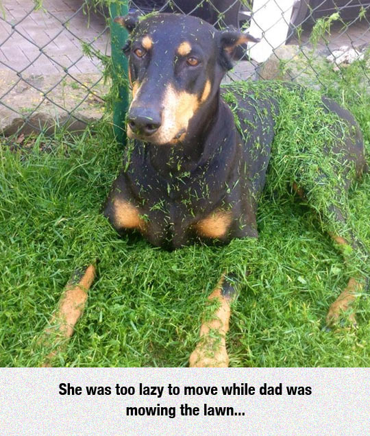 funny-dog-playing-grass-just-lawn