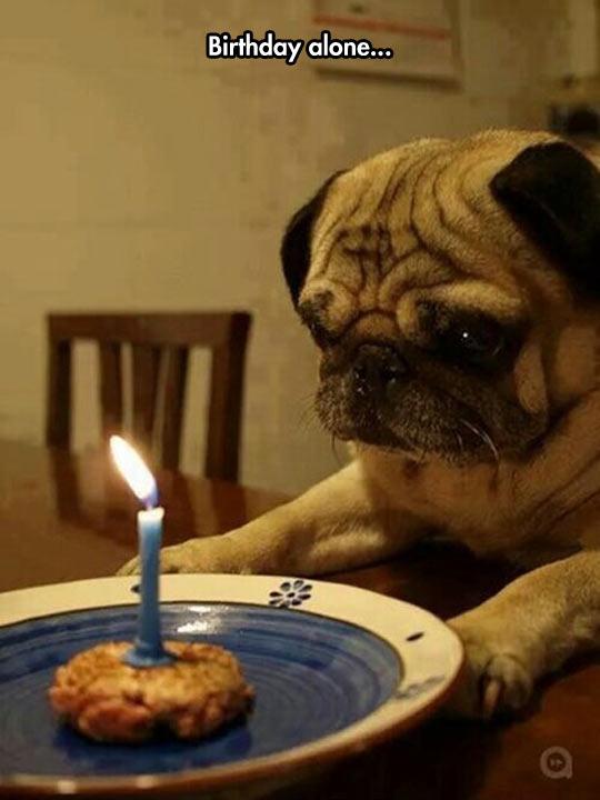 funny-dog-pug-cookie-candle-birthday
