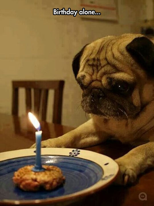 The Lonely Pug
