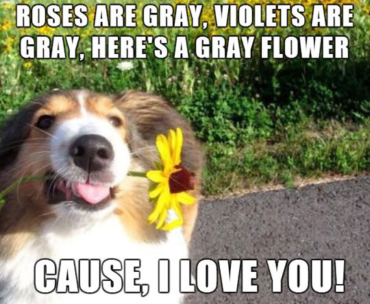 funny-dog-sight-gray-poem-flower