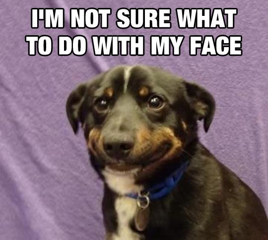 Dog Awkward Face