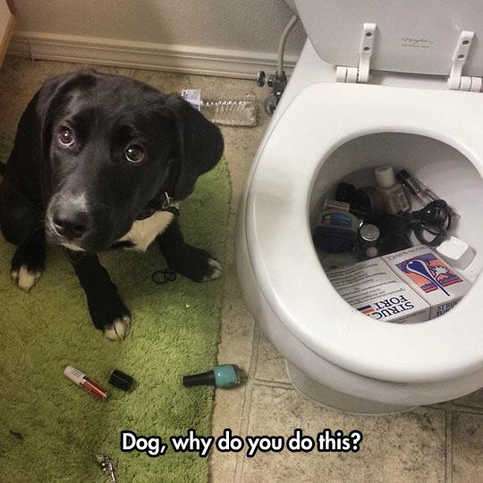 funny-dog-toilet-make-up-wet