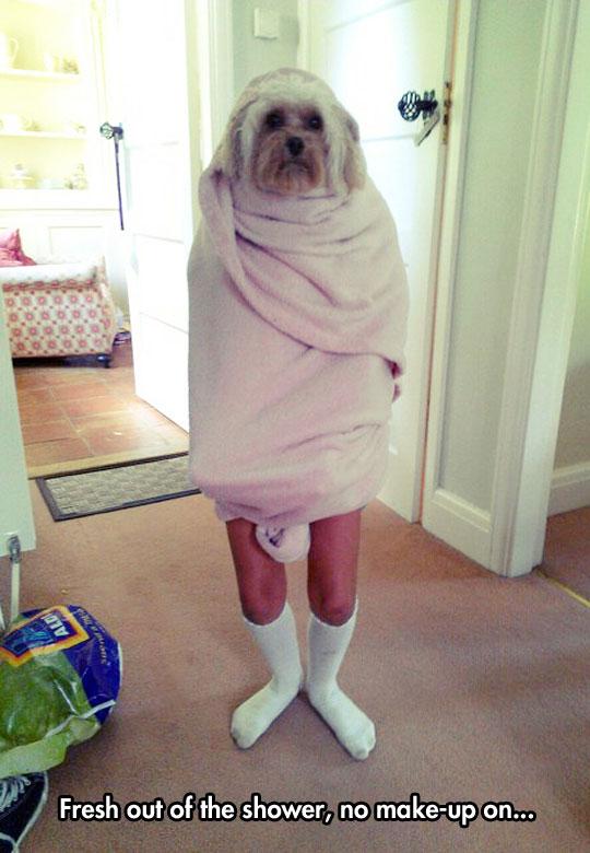funny-dog-towel-shower-human-legs