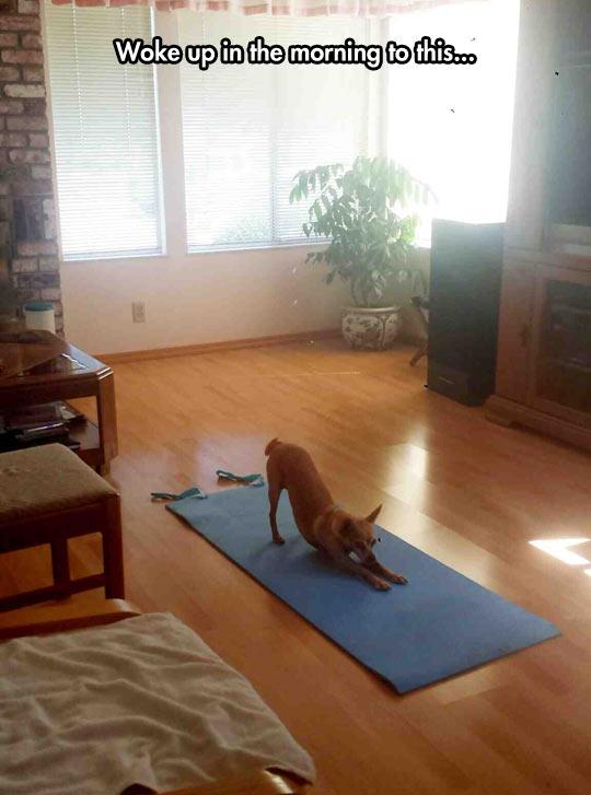 He Was Doing Yoga