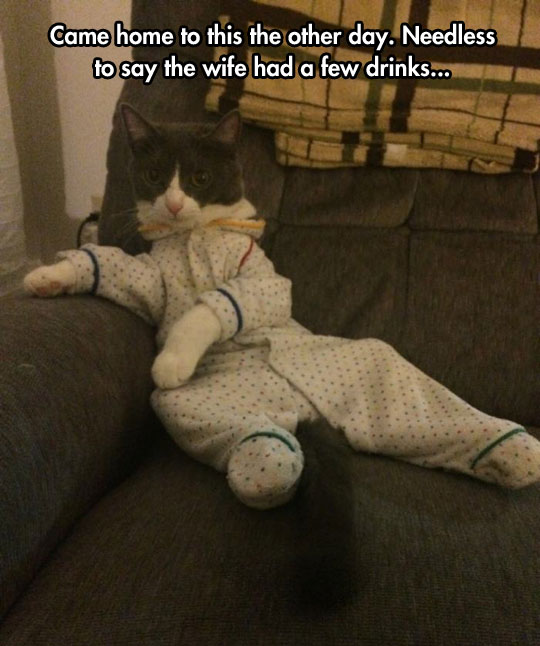 funny-dressed-cat-couch-wife