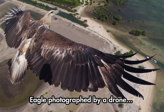 funny-eagle-drone-sky-flying-photo