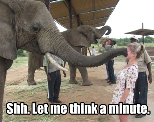 Elephant Considers Your Opinion