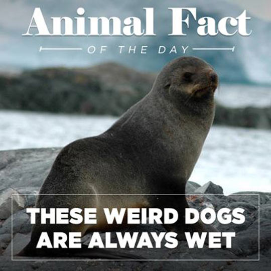 You Know, Wet Dogs