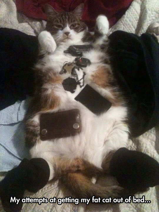 funny-fat-cat-bed-objects-belly