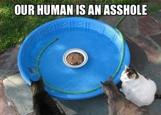 Hunger Games: Cat Version