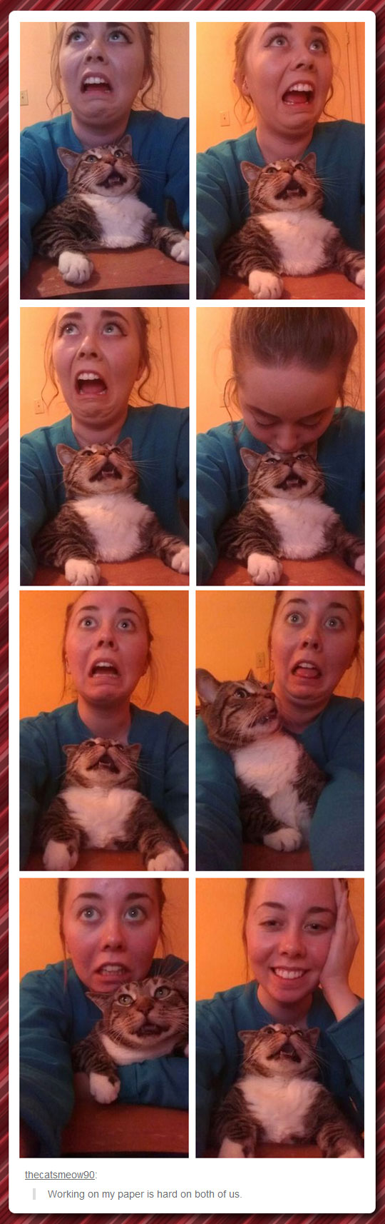 Suffering With My Cat
