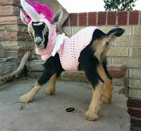 funny-goat-unicorn-knitted-suit