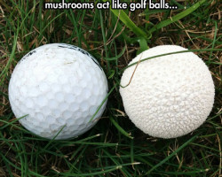 Undercover Mushrooms