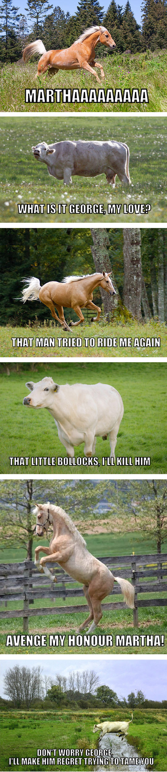 funny-horse-cow-field-farm
