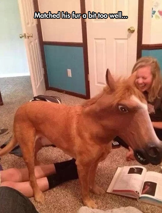 funny-horse-dog-disguise-girls