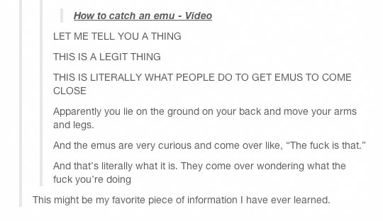 funny-how-to-catch-emu-legs-move