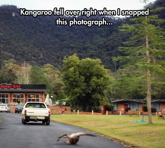 funny-kangaroo-falling-street