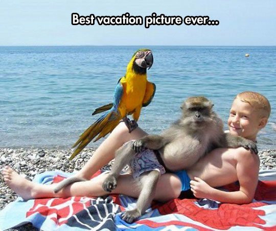 funny-kid-monkey-parrot-beach