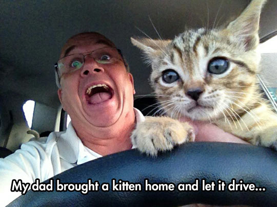 Kitty Wants To Drive