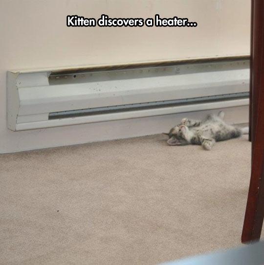 funny-kitten-sleeping-warm-heater