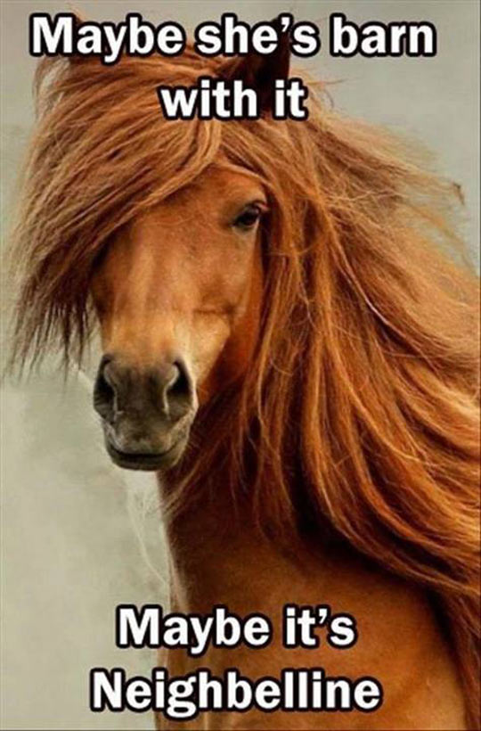 funny-long-hair-horse-fashion