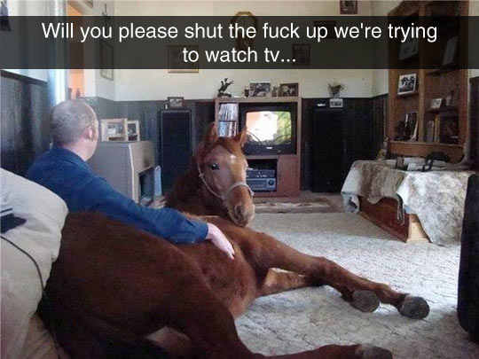 Man Watching TV With His Best Friend