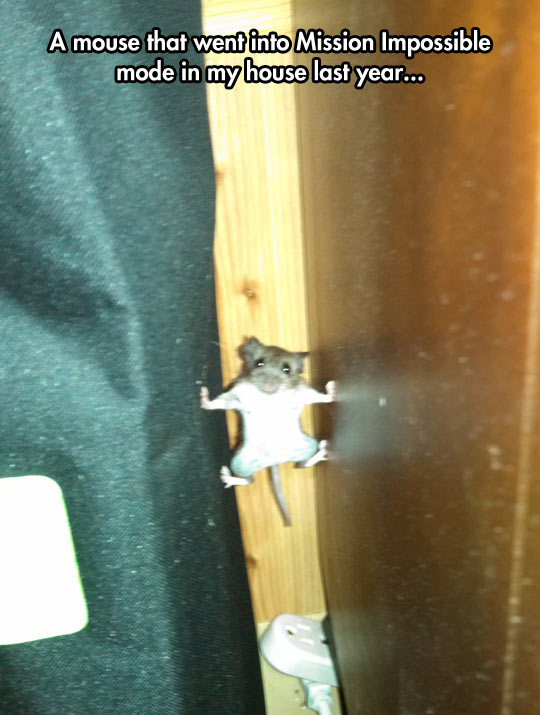 funny-mouse-Mission-Impossible-wall