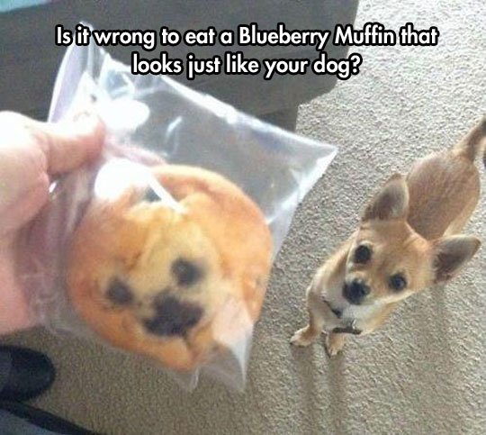 funny-muffin-dog-face