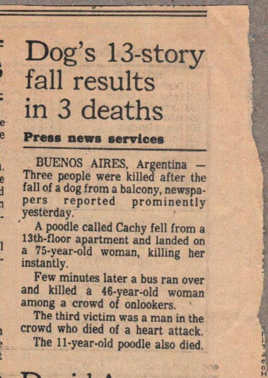 funny-news-dog-fall-three-victims