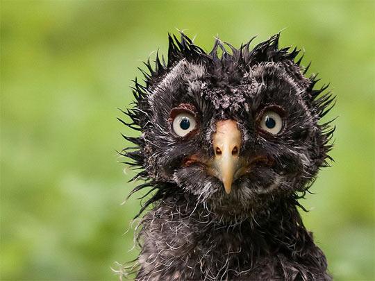 A Wet Owl