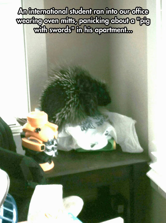 funny-porcupine-boy-screaming-apartment