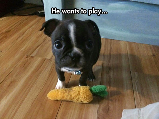 funny-puppy-dog-toy-play-carrot